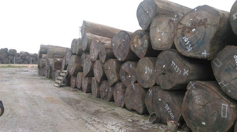 Gỗ gụ là loại gỗ quý hiếm được xếp vào gỗ nhóm 1 ở nước ta